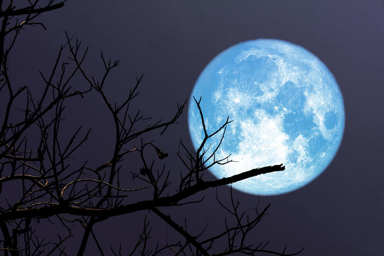 Low angle view of bare tree against moon at night