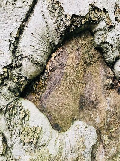 Full frame shot of tree trunk