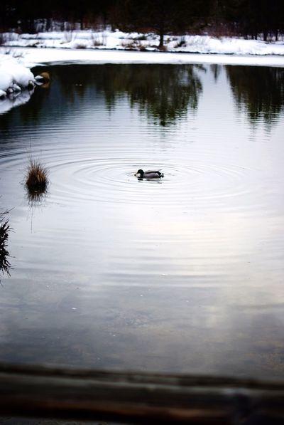 It's Cold Outside Pond Keystone is a dreamy winter wonder land!