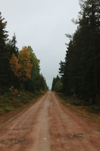 Empty Road Amidst Trees In Forest Against Clear Sky