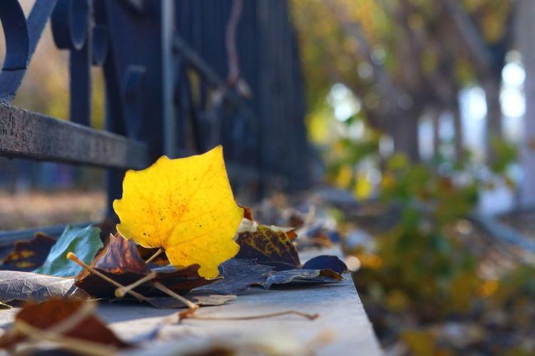 落木 Yellow Nature Leaf Flower Outdoors Fragility Tree Low Angle View Taking Photos Fllower Enjoying Life Cheese! No People Day Close-up Hello World Alone Relaxing