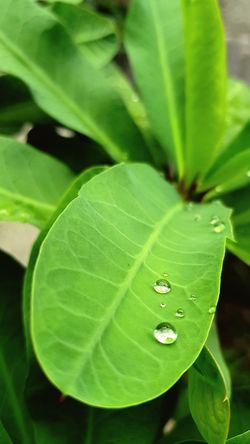 Leaf Green Color Nature Water Freshness Close-up Fragility Drop Plant Day No People Outdoors Growth Beauty In Nature Eyeem Photography Eyeem Philippines Beauty In Nature Street Tranquility Tranquil Scene Sunset Sunlight Sea Beach Nature