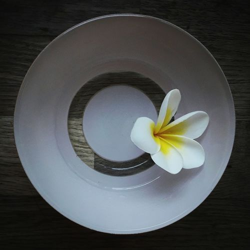 Directly above shot of white flower on table