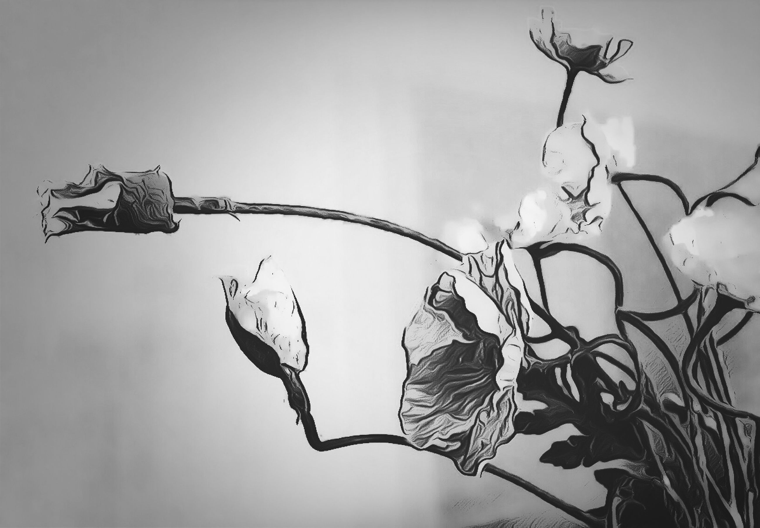 low angle view, branch, sky, close-up, twig, plant, focus on foreground, hanging, silhouette, nature, growth, day, stem, no people, outdoors, clear sky, leaf, flower, fragility, tree