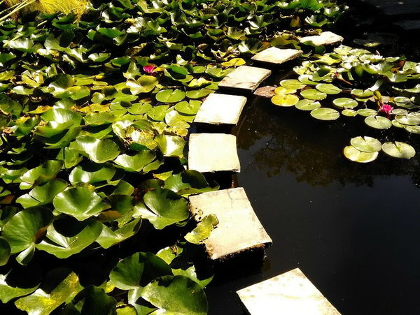 Water Pond Water Lily Nature Floating On Water Flower Day Tranquility No People Beauty In Nature Leaf Outdoors Lily Pad Freshness Close-up Lake Fountain Manmade Porto Portugal Photography Photo Nature Freshness