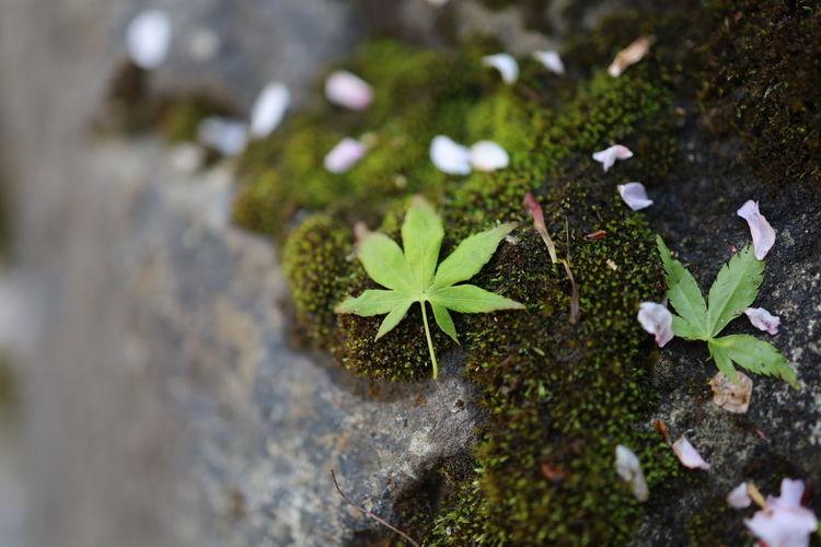 Growth Plant