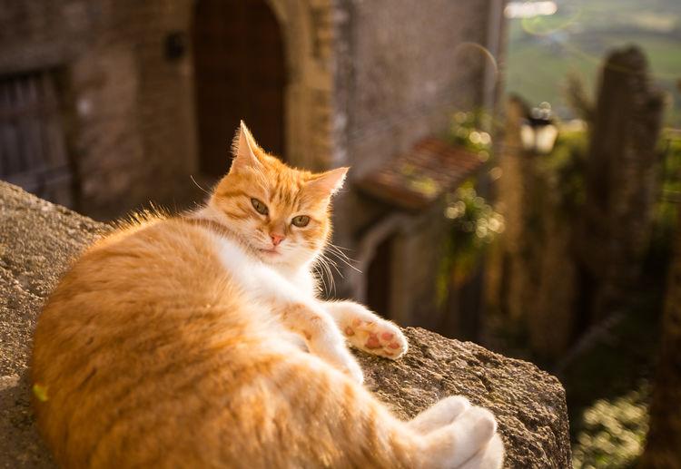 Garfield Italia MedievalTown Sermoneta Animal Themes Cat Domestic Animals Domestic Cat Feline Ginger Cat Italy Looking At Camera Mammal Medieval Medieval Burg Medieval City Pets