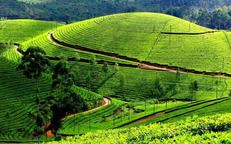 Beautiful landscape in nature at Darjiling Landscape