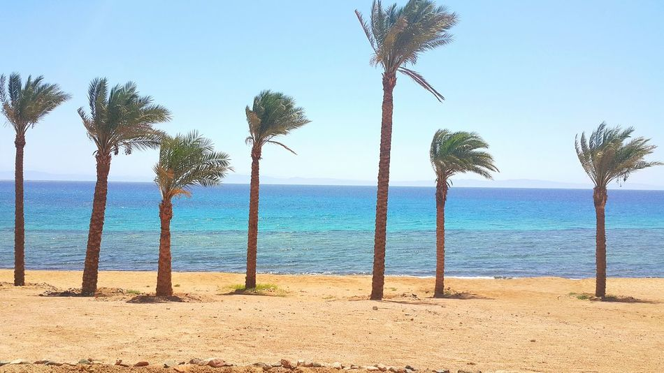 Beautifully Organized Peaceful View Peaceful View Passion Colors Sky Nature Beauty Dahab RedSea Egypt Morning Palm Tree Palm Beach Myegypt Sinai