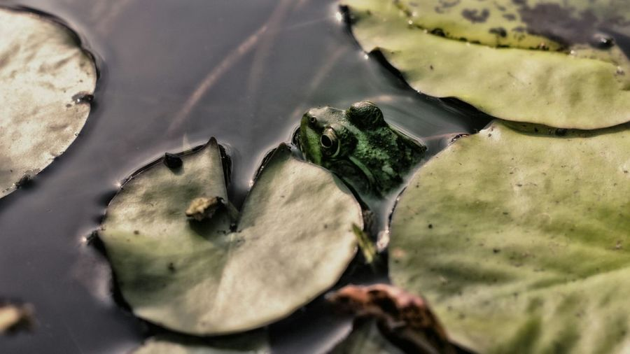 Close-Up Of Lily Pads In Water