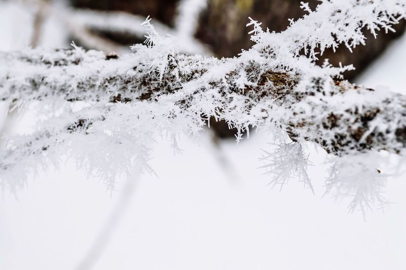 Close-Up Of Snow Covered Stick During Winter