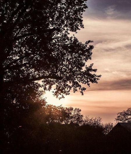 Lifes_art Lebens_art Sunset Sundown Fall Autumn Trees Forrest Sky Heaven Clouds Canon DSLR Photography Canondslrphotography Dslrphotography Canonphoto Canon_photos Canonphotography Leafs Beautiful Germany Brandenburg Linum Like4like
