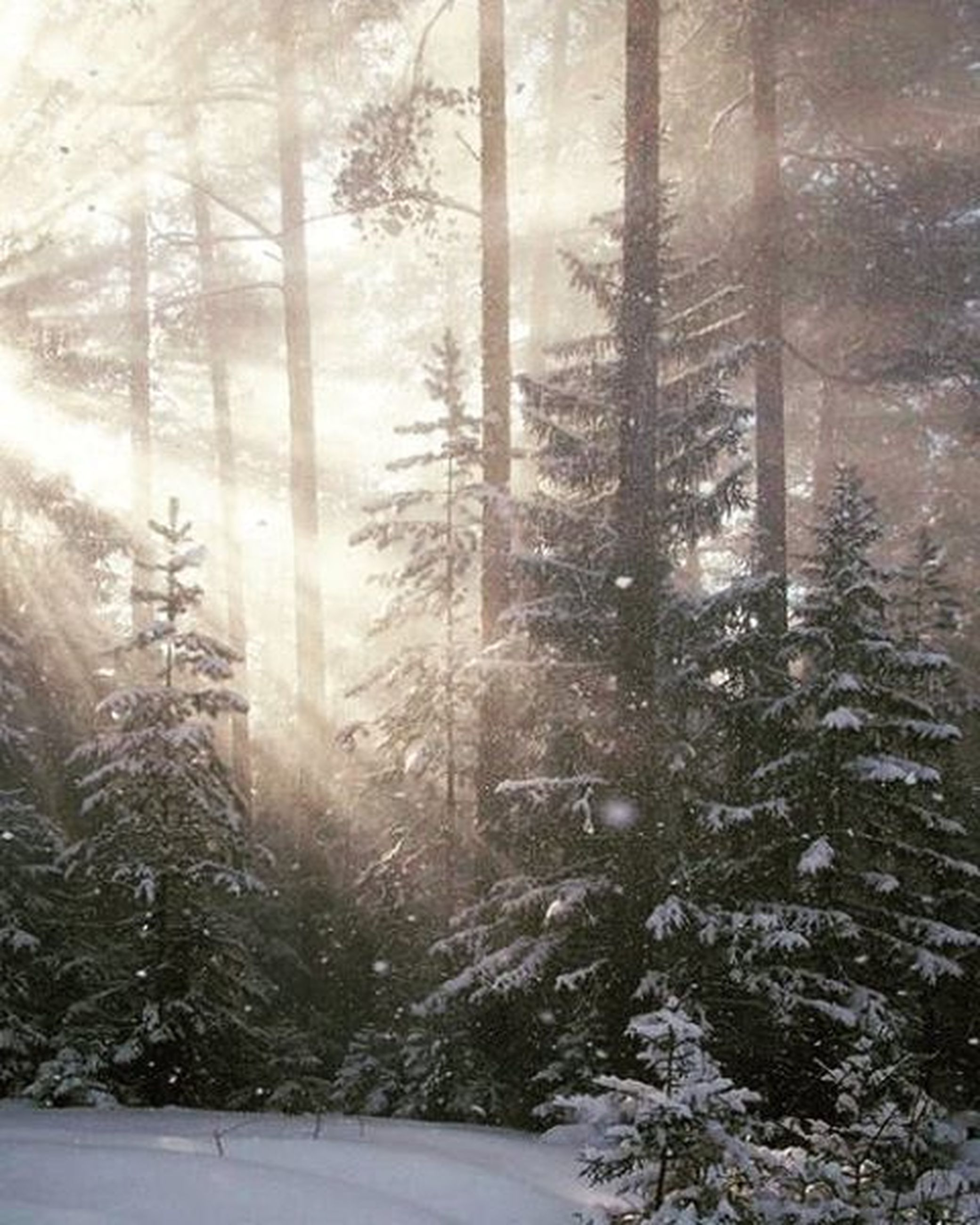 tree, winter, cold temperature, snow, tree trunk, season, weather, indoors, glass - material, nature, fog, forest, tranquility, window, transparent, covering, bare tree, sunlight, day, growth