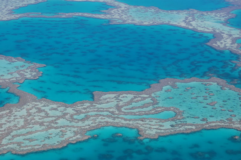 Aerial view of the reef Great Barrier Reef. Queensland. Australia Water Blue Day High Angle View Nature No People Waterfront Sea Outdoors Reflection Beauty In Nature Pattern Turquoise Colored Tranquility Close-up Full Frame Backgrounds Purity Coral Reef Great Barrier Reef Queen Australia