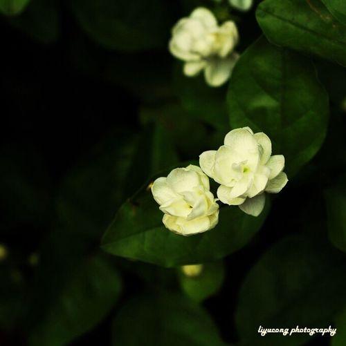 Flower Moonriver Jiaxing Taking Photos