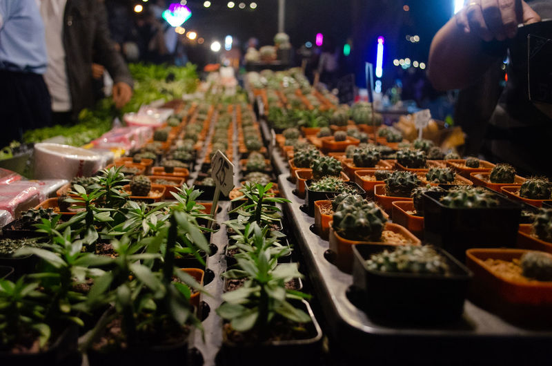 City Market Vegetable Business Finance And Industry Herb Nightlife Food And Drink Medical Cannabis Cannabis Plant Marijuana - Herbal Cannabis