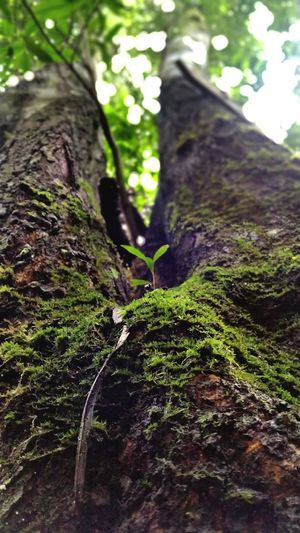 Nature EyeEm Nature Lover Life Tree Plant Growing Root Tree Of Life Nature Photography Green Greenery Tree Trunk Close Up Depth Of Field EyeEm Gallery Edited Nature Shot