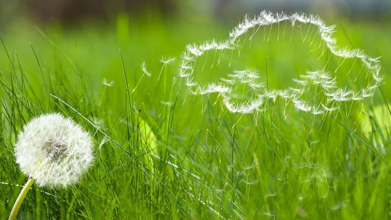 Rince over me Green Color Nature Grass Beauty In Nature Day Freshness Close-up Plant Outdoors