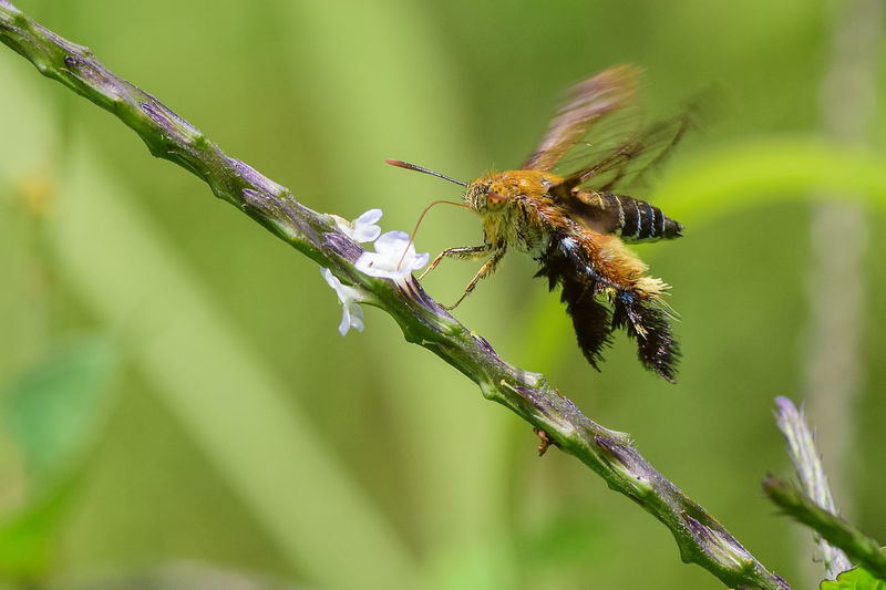 Close-up of moth pollinating flower