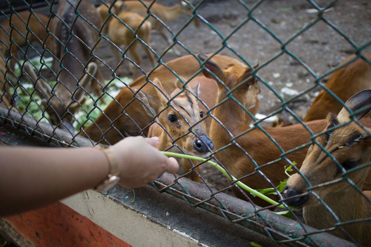 View of hand feeding through chainlink fence