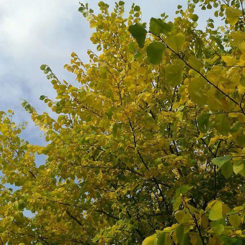 Красавица осень :)