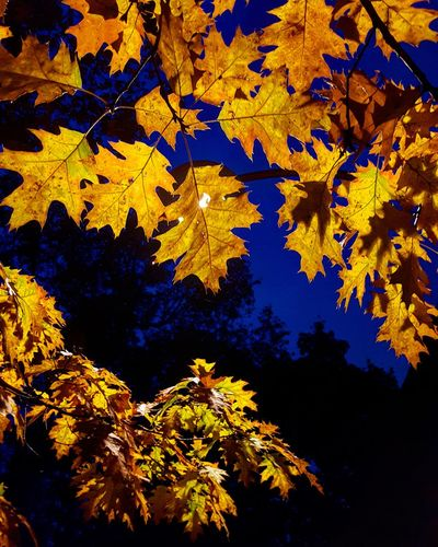 Night's colors Photography Colors Contrasting Colors Contrasti Night Nightphotography Light Light And Shadow Bluesky EyeEm Best Shots EyeEmNewHere EyeEm Nature Lover EyeEm Selects EyeEm Gallery Eye4photography  EyeEm EyeEmBestPics EyeEm Best Edits Eye Eyeemphotography EyeEm Best Shots - Nature EyeEm Masterclass Eyeem Market Tree Leaf Autumn Yellow Change Sky Close-up
