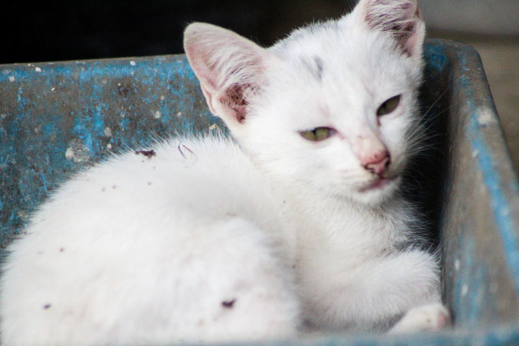 Animal Animal Head  Animal Lover Animal Photography Cat Cute Outdoors White