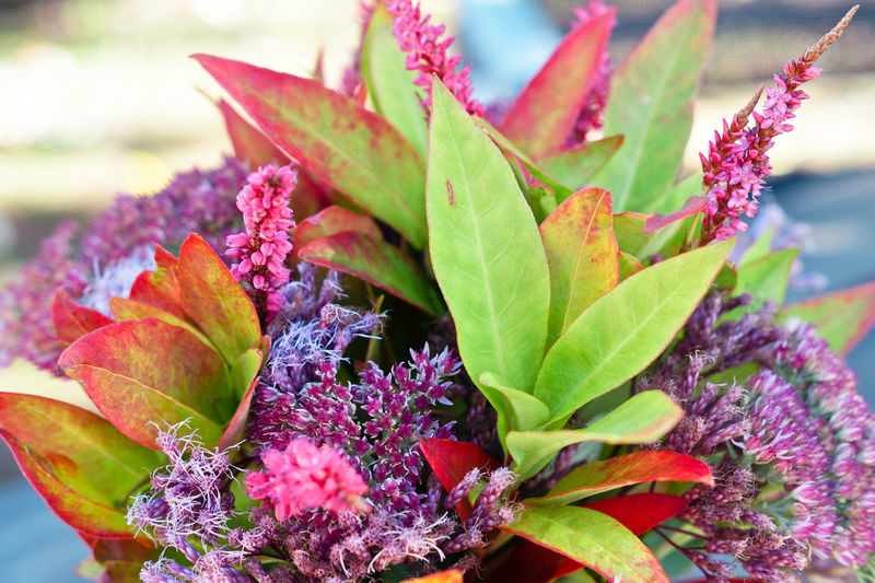 Crysanthemum Cosmea Autumn Autumn colors Bunch Of Flowers Lysimachia