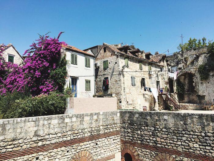 Beauty and the Beast Split Croatia Split Croatia Flowers Stonehouse Rustichouse