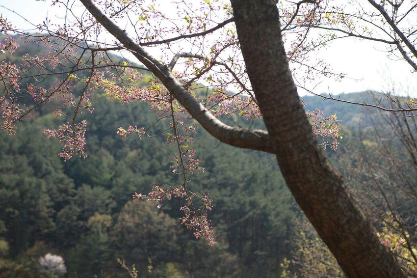 Hopefully Moring Tree Naturelovers 바른생태살림원   be the Nature
