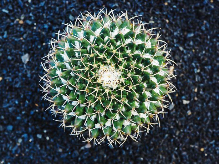 Cactus Geometry