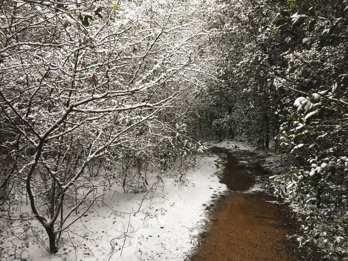 Snowing Muddy Winter Adventure Exploring Nature Woods Forest Road Trail Tranquility Trekking Hiking Trail Hiking Tree Nature No People Bare Tree Branch Beauty In Nature Winter Outdoors Snow Day Cold Temperature