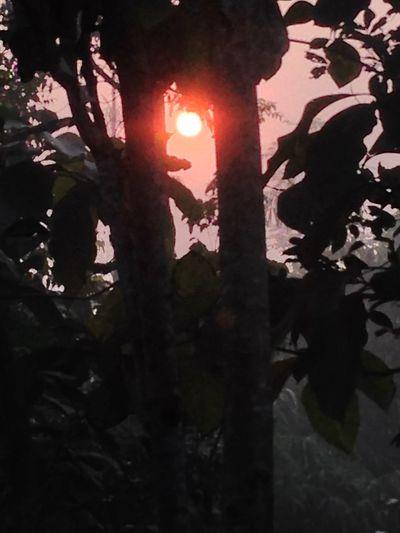 Sunset Trees Sunrise INDONESIA Nature Beautiful Peace Landscape Getting Inspired
