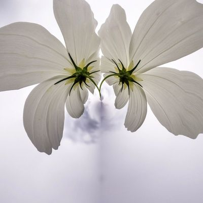 3XSPUnity EyeEm Best Shots Enjoying Life EyeEmNewHere Plant Beauty In Nature Flower Growth Flowering Plant Vulnerability  Fragility Close-up Petal Nature Flower Head No People Freshness Inflorescence Day Outdoors Pollen White Color Shadow Plant Stem