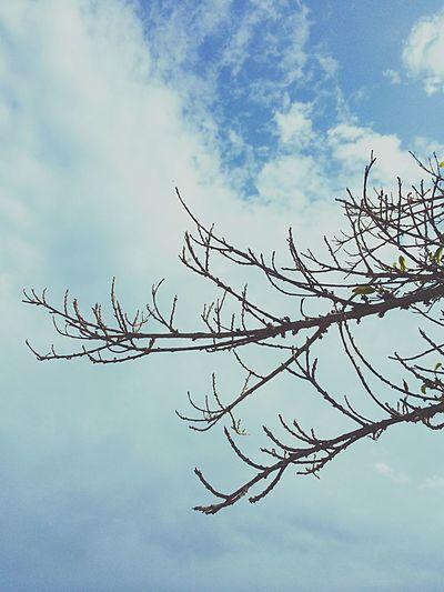 ยืนมองท้องฟ้า First Eyeem Photo
