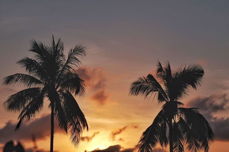 Low angle view of silhouette palm trees against sky at sunset