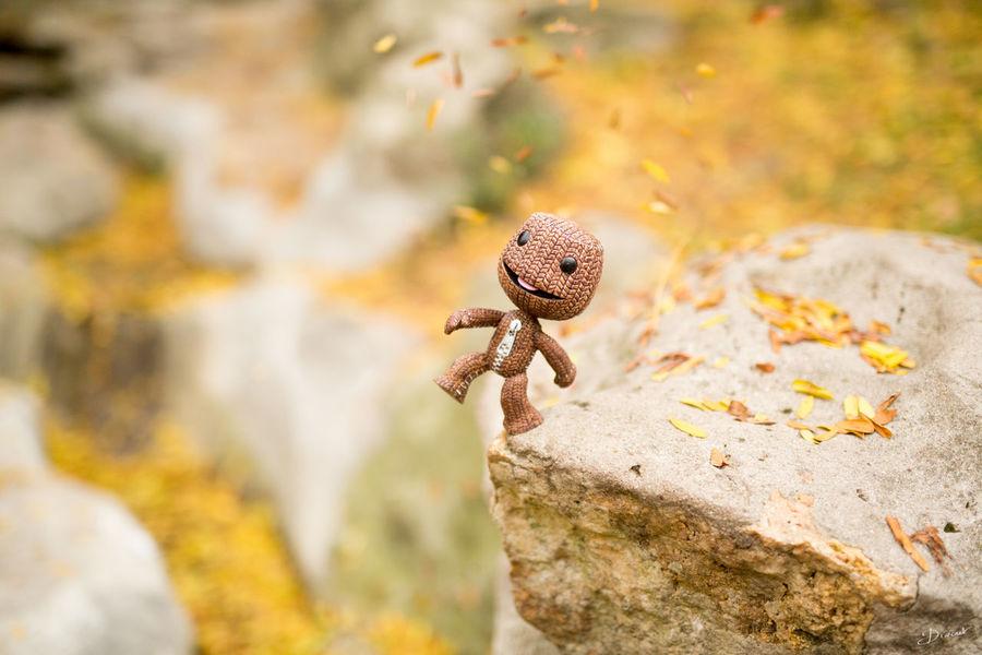 Sackboy Autumn Automne Little Big Planet