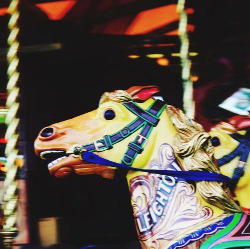 Carousel Horses Focus On Foreground Amusement Park Animal Representation Carousel Arts Culture And Entertainment Close-up Animal Themes Amusement Park Ride No People Vintage Fair Driffieldshow