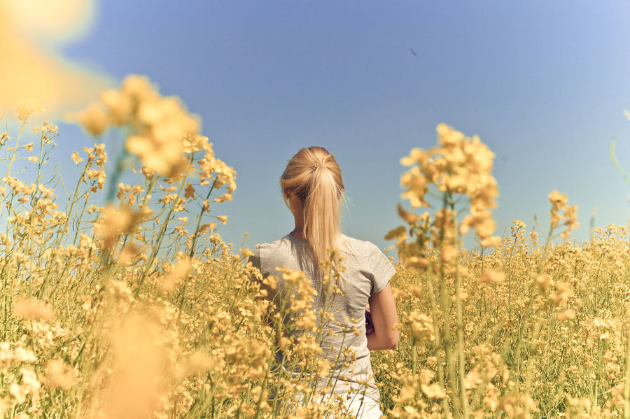 Beauty In Nature Blooming Blue Close-up Day Field Flower Focus On Foreground Fragility Growing Growth Landscape Nature No People Outdoors Petal Plant Scenics Selective Focus Sky The Great Outdoors - 2016 EyeEm Awards The Portraitist - 2016 EyeEm Awards Tranquil Scene The Essence Of Summer Yellow