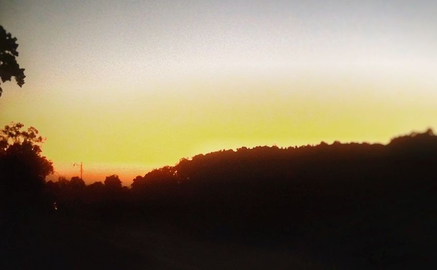 EyeEmNewHere Nature Environment forest 🌳 Sunset Paint The Town Yellow