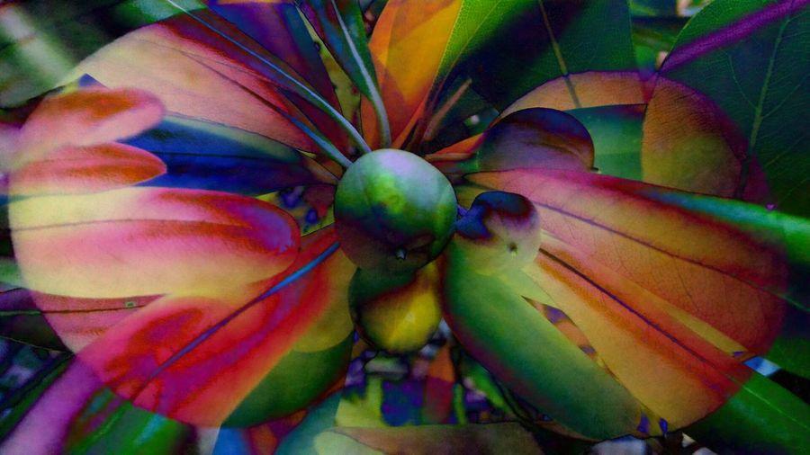 Noolive Noliveimagination Immaginazionedellanonoliva Noliva Immaginazione Olive Imagination Fakeolive Olivatarocca Psichedelico Psychedelic Psychedelicart Artepsichedelica Psicadelia Colorinascosti Hiddencolours Microscopio Microscope Farfalla Butterfly Cerchi Circles Ape Bee