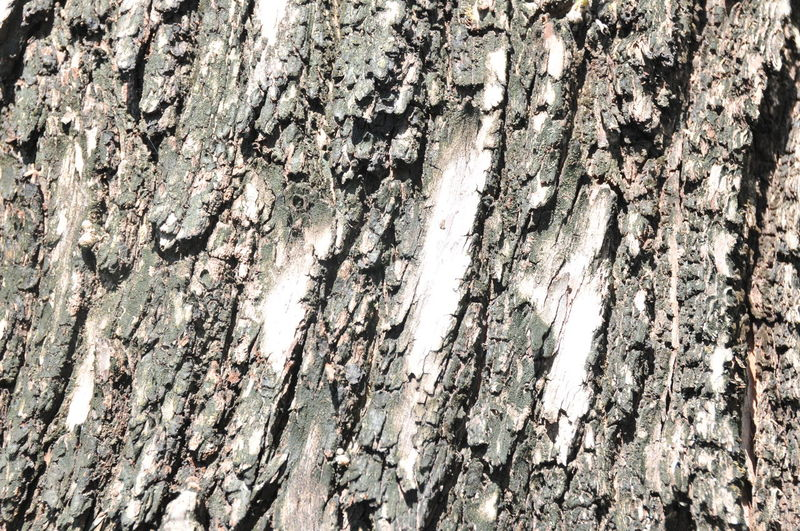 Backgrounds Bark Close-up Cracked Day Full Frame Knotted Wood Nature No People Outdoors Pattern Rough Textured  Tree Tree Trunk Wood - Material Wood Grain