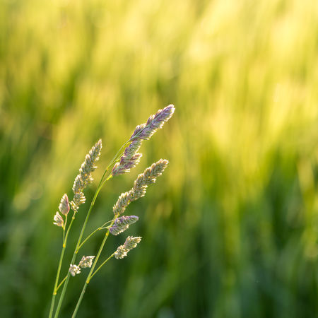 Agriculture Field Green Green Color Rural Tranquility Beauty In Nature Blurred Background Close-up Day Nature No People Outdoors Rural Scene Serene Tranquil Scene