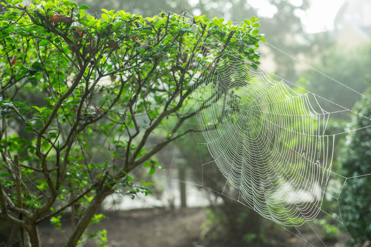 Pretty spider web between the plants. Plant Tree Green Color Growth Focus On Foreground Beauty In Nature Day Nature Close-up Spider Web No People Leaf Plant Part Forest Fragility Branch Outdoors Tranquility Vulnerability  Land Complexity Bokeh Blurred Background