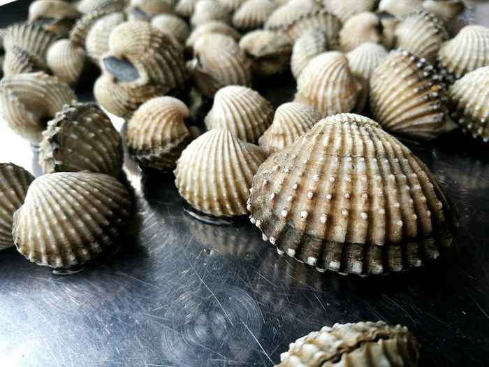Seashell Animal Shell Food Nature Close-up Cockles Eat fresh First Eyeem Photo