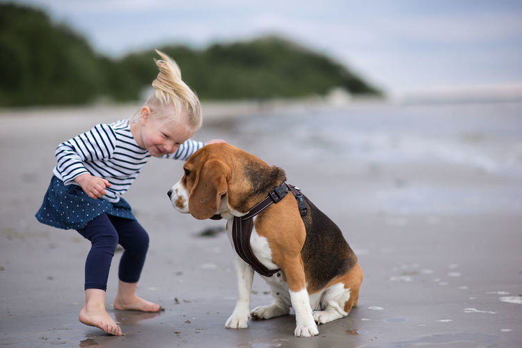 Little girl and her beagle dog on the beach Dogs Funny Happy Animal Themes Beagle Blond Hair Casual Clothing Child Childhood Day Dog Domestic Animals Focus On Foreground Full Length Girl Litlle Mammal One Animal One Person Outdoors People Pets Real People Water Young Adult