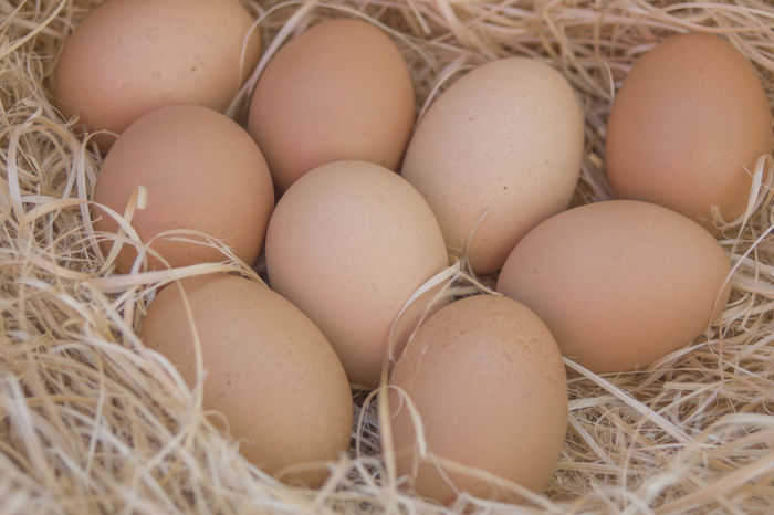 Animal Egg Backgrounds Beginnings Bird Nest Brown Close-up Day Egg Egg Carton Food Food And Drink Fragility Freshness Healthy Eating Indoors  New Life No People Raw Food Straw