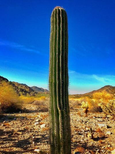 Blue Nature Tranquility Growth Cactus Plant Beauty In Nature Tranquil Scene Sky Scenics Non-urban Scene Desert Day Outdoors No People Landscape Green Color Clear Sky IPhone 7 Plus L. Jeffrey Moore