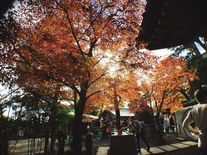 Mt.Takao Fallen Leaves Fall Autumn Fall Colors Temple 高尾山 落ち葉 紅葉 秋