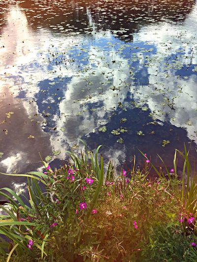 Summer Views Water Reflections Clouds And Sky Summer EyeEm Nature Lover EyeEm Best Shots IPhoneography Water Summertime Reflection